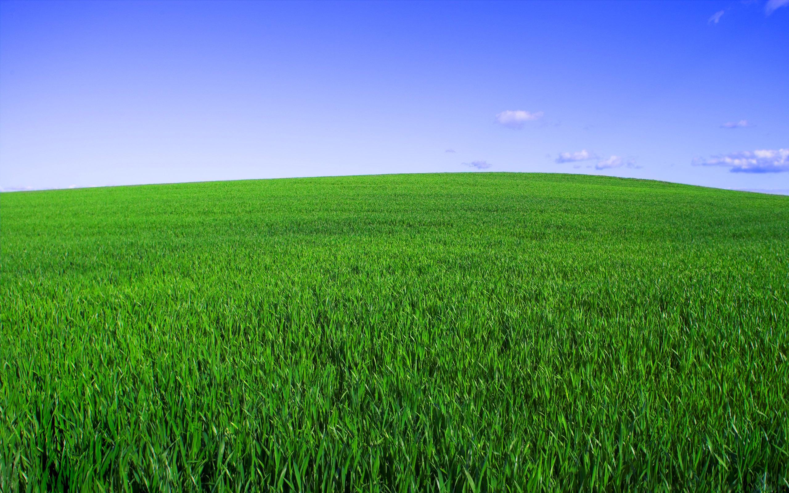 Corn Fields In Denmark • WeScoop4U